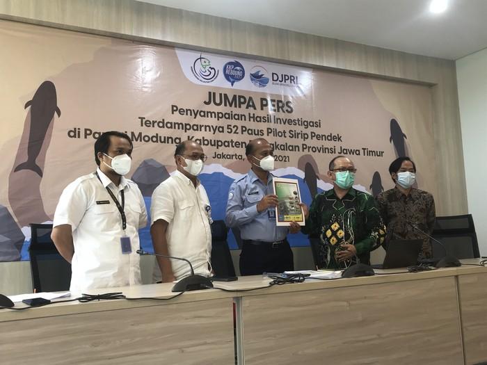 Tim FKH Unair Ungkap Hasil Nekropsi 52 Paus Pilot Terdampar di Jatim