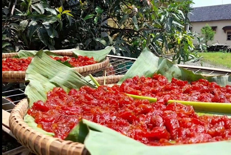 Torakor, Tomat dengan Rasa Kurma yang Manis Segar