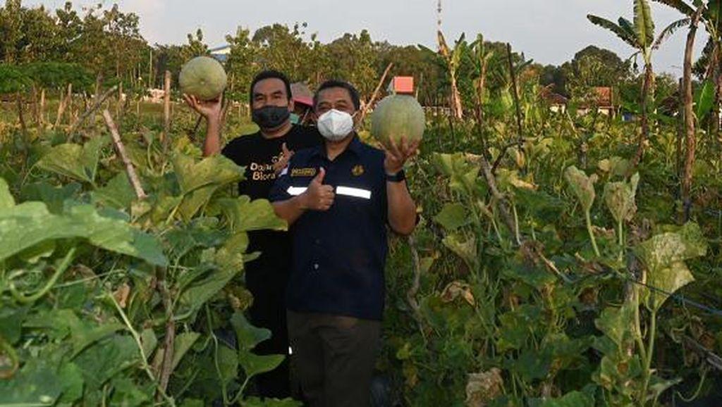 Kembangkan Cepu Ecopark Mentul, Kementerian ESDM Garap Kebun Melon