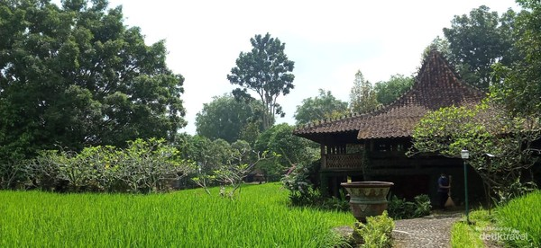 Villa tengah sawah
