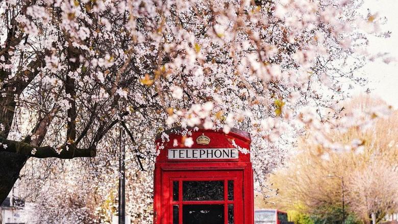 Tujuan Musim Semi yang Asyik di Inggris
