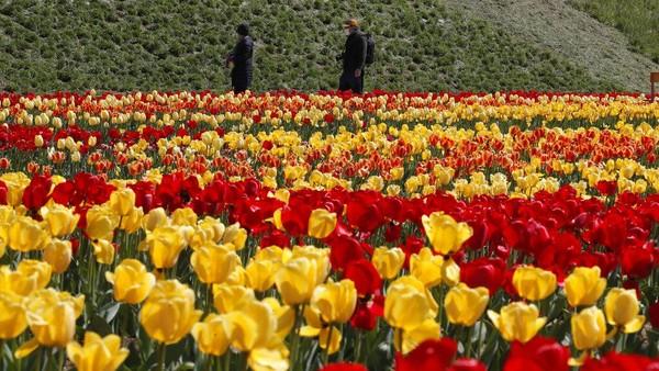 Korea Selatan tengah menyambut musim semi yang akan berlangsung dari bulan Maret hingga bulan Mei dengan suhu sekitar 7-23 ℃.