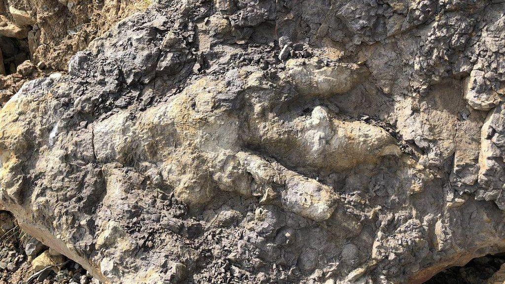 Jejak Kaki Dinosaurus Raksasa Pemakan Daging Ditemukan di Pantai Inggris