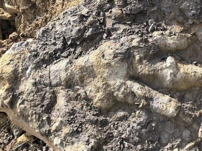 Wow! Jejak Dinosaurus Raksasa Pemakan Daging Ditemukan di Inggris