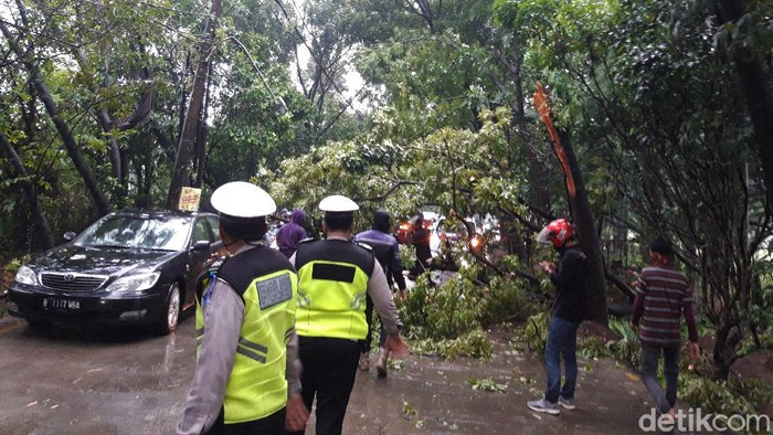 Pohon tumbang di Tangsel.