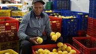 Cegah Penumpukan Stok, Kementan Edarkan Lemon ke Jabodetabek-Bali