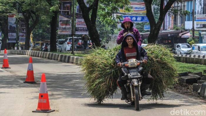 Aksi berbahaya dilakukan pengendara ini dengan membonceng pada motor yang penuh rumput. Namun pengendara dan pembonceng terlihat santai saja.