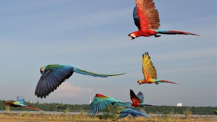 Seru Begini Caranya Melatih Burung Macaw
