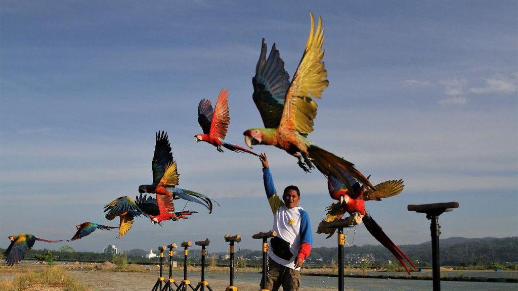 Seru! Begini Caranya Melatih Burung Macaw
