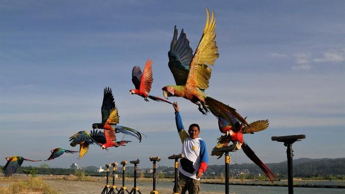 Burung macaw dijemur pemiliknya saat dilatih di sekitar Teluk Kendari, Kendari, Sulawesi Tenggara, Kamis (15/4/2021). Macaw merupakan burung yang memiliki habitat alami di hutan-hutan di wilayah Amerika bagian Utara (Meksiko), Amerika Selatan dan Karibia. ANTARA FOTO/Jojon/aww.