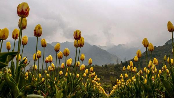 Taman ini adalah salah satu tempat terbaik untuk melihat bunga tulip.