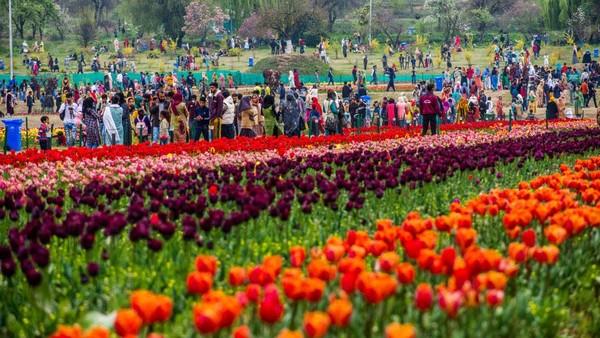 Taman itu bak kapet warna-warni yang menghampar di kaki bukit Zabarwan.