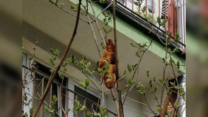 A croissant hangs from a tree outside a building in Krakow, Poland. KTOZ/Facebook