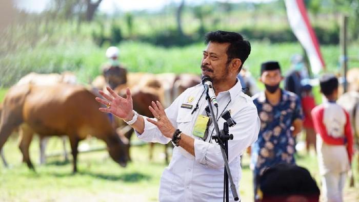 Menteri Pertanian, Syahrul Yasin Limpo memantau pengembangan sapi dan kerbau siap jual yang memiliki bobot di atas rata-rata di Kabupaten Jeneponto, Sulawesi Selatan.