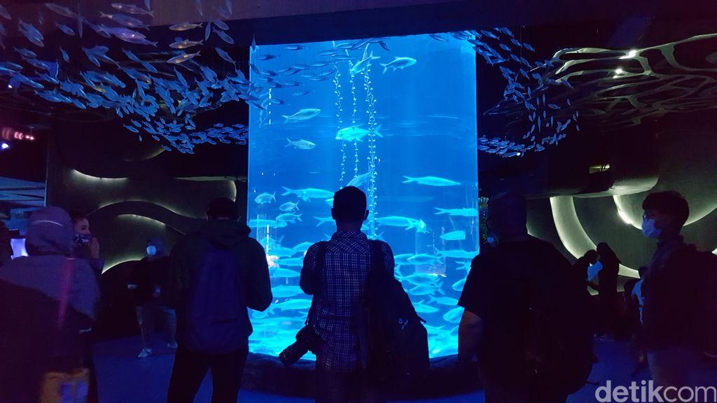 Ngabuburit di Jakarta Aquarium dan Safari