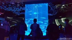 Ngabuburit Asyik di Jakarta, Ngemal Sambil Lihat Ikan Saja