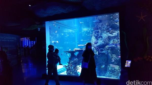 Jakarta Aquarium ini tempatnya ada di dalam mal Neo Soho Jakarta.