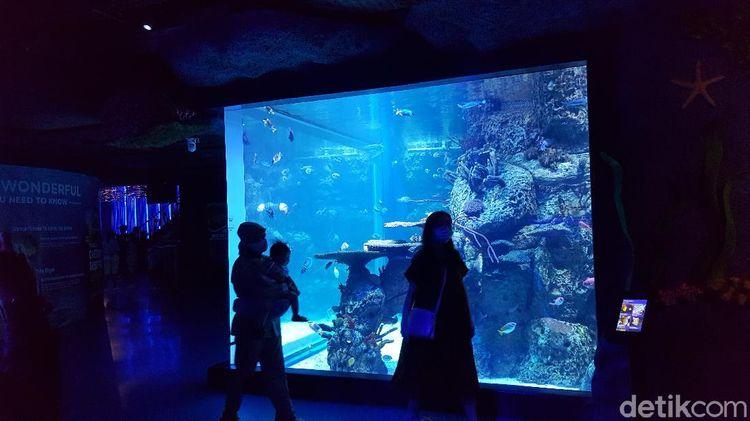 Foto: Ngabuburit di Jakarta Aquarium dan Safari