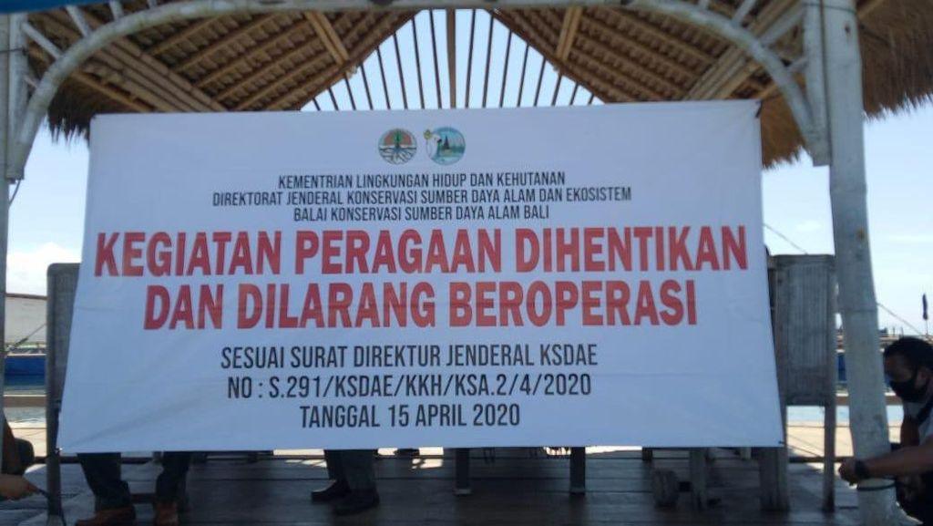Lokasi Lucinta Luna Tunggangi Lumba-lumba Pernah Ditutup BKSDA Bali