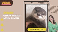 Viral Si Degen, Otter Gemoy yang Seliweran di Medsos