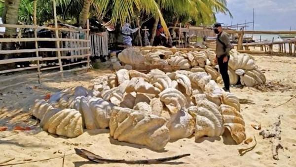 Penjaga pantai Filipina menemukan kerang raksasa yang dikenal warga sebagai taklobo. (Tangkapan layar video AP/CNBC)