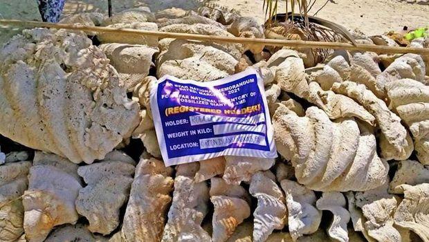 Otoritas Filipina menyita lebih dari 150 ton fosil kerang raksasa di Pantai Pulau Sitio Green. Nilainya senilai hampir USD 25 juta.