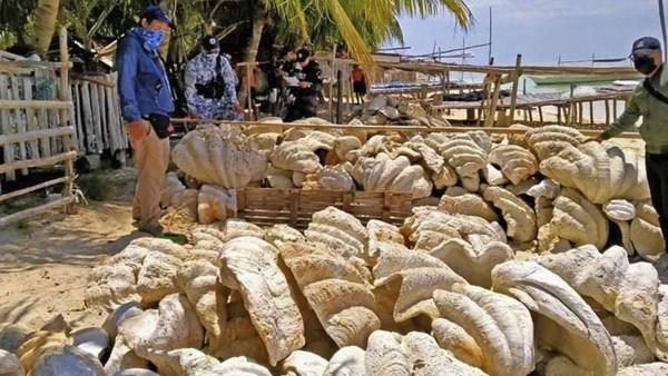 Filipina merupakan rumah bagi sebagian besar spesies kerang tropis di dunia. (Tangkapan layar video AP/CNBC)