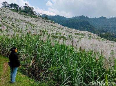 Foto: Bukan di Luar Negeri, Ini di Kulon Progo
