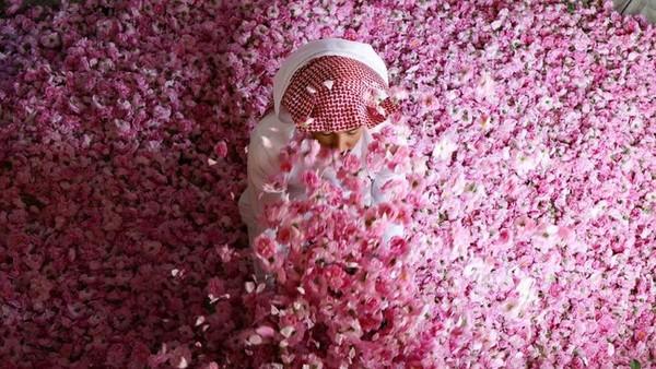 Botol minyak mawar dijual dalam ukuran yang berbeda-beda. Ukuran paling kecil saja bisa dijual dengan harga USD 106 atau sekitar Rp 1,5 juta.(AFP)