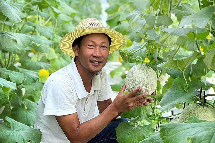 Melon Jepang Dimanjakan dengan Iringan Musik dan Dipijat