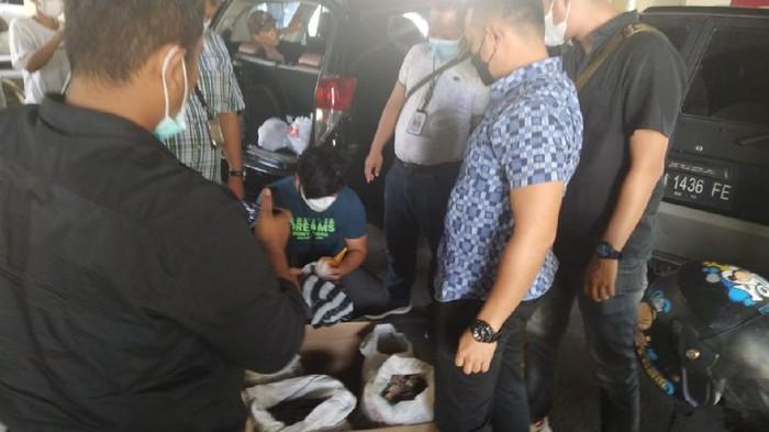 Bareskrim tangkap dua penjual sisik trenggiling dan paruh rangkong di Sumbar (dok Polri)