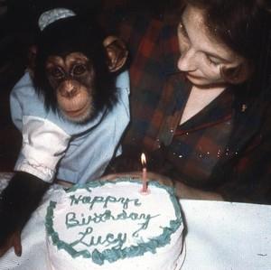 Kisah Wanita yang Menyesal Membesarkan Simpanse Seperti Anak Sendiri