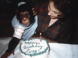 Most Pop Sepekan: Kisah Wanita yang Besarkan Simpanse Seperti Anak Sendiri