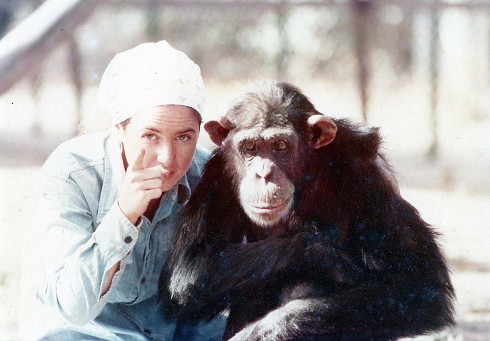 Lucy Simpanse