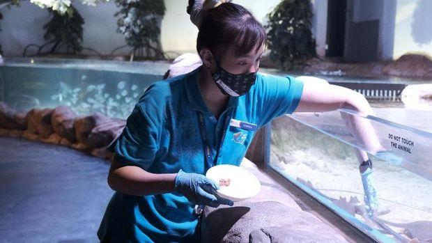 Para wanita di balik Jakarta Aquarium.