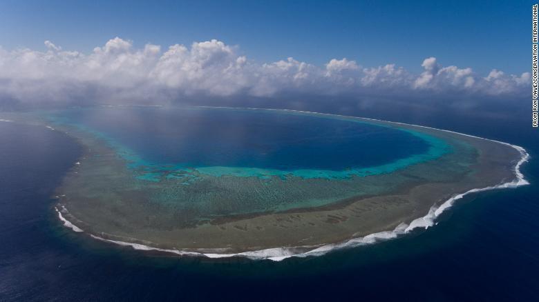 Konservasi laut Blue Nature Alliance