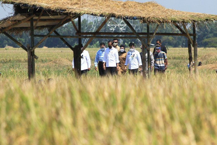 Presiden Joko Widodo (tengah) didampingi Menteri Pertanian Syahrul Yasin Limpo (ketiga kanan), Dirut Perum Bulog Budi Waseso (kedua kiri) dan Bupati Indramayu Nina Agustina (keempat kanan) menghadiri panen raya padi di desa Wanasari, Bangodua, Indramayu, Jawa Barat, Rabu (21/4/2021). Selain menghadiri panen raya, Presiden Jokowi juga berdialog untuk menerima keluhan para petani. ANTARA FOTO/Dedhez Anggara/aww.