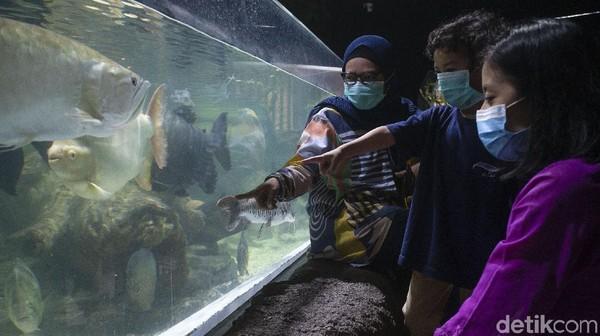 Kehadiran beragam satwa akuatik dan non-akuatik itu membuat Jakarta Aquarium Satwa jadi salah satu tempat wisata yang kerap dikunjungi warga untuk menunggu waktu berbuka puasa.