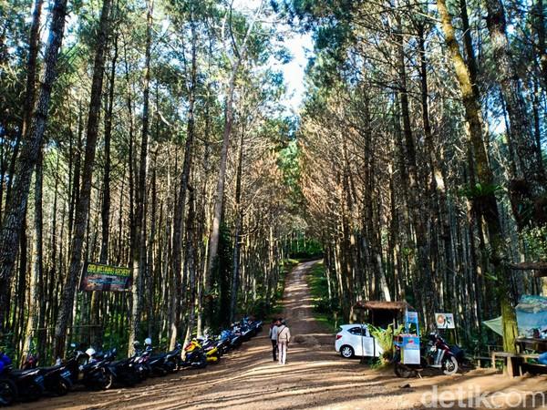 Hutan Pinus Giri Wening berada di Desa Cikidang, Lembang itu menyuguhkan suasana asri hutan pinus dan kesegaran udara yang tak ada di kota.