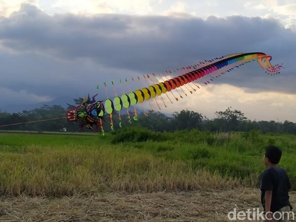 Persawahan yang digunakan menerbangkan layang-layang ini persis di pinggir Jalan Raya Magelang-Salatiga.