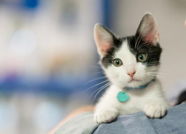 Kumis sangat penting bagi kucing karena berperan dalam mendeteksi objek dan navigasi dalam gelap. Jadi kalau dipotong, si kucing bisa kebingungan lho. ( Getty Images/iStockphoto/andresr)