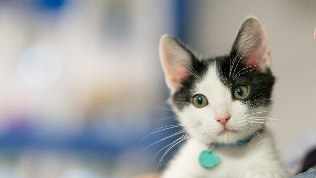 Mau Pelihara Anjing atau Kucing, Berapa Biayanya Ya?