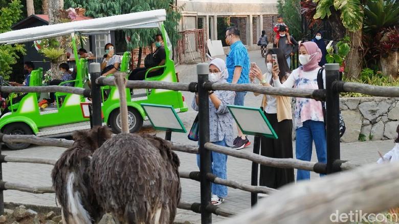 Asyiknya Ngabuburit di Lembang Park and Zoo