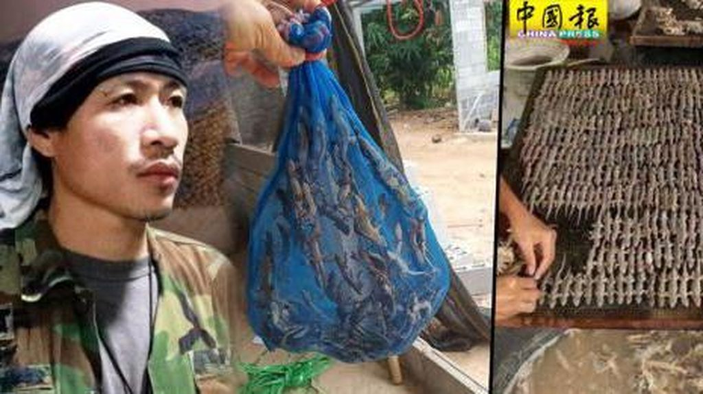 Jadi Obat di China, Thailand Sukses Jualan Cicak Kering Raup Rp 139 Juta