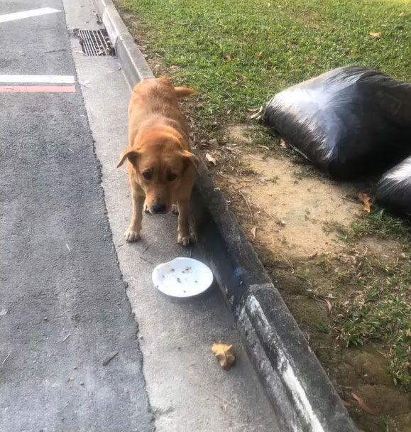 Mulia! Wanita Ini Habiskan Rp10 Juta Demi Beri Makan 60 Anjing Jalanan