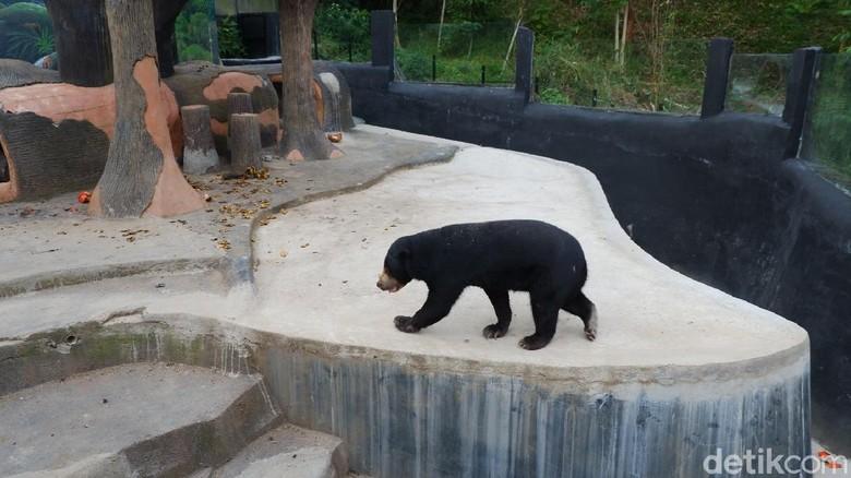 Ngabuburit jadi tradisi menyenangkan yang dilakukan masyakarat sambil menantikan waktu berbuka puasa. Salah satu destinasinya yakni Lembang Park Zoo.