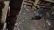 Yang Ditemukan Usai Kuburan Babi Ngepet Dibongkar Polisi