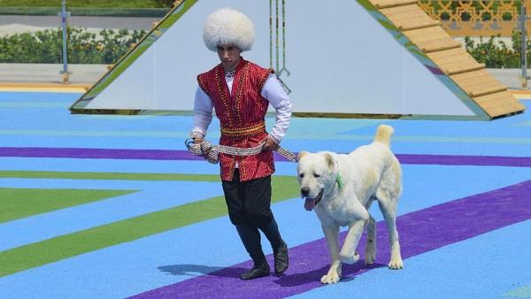 Selain dijadikan hari libur nasional, anjing Alabay juga memiliki patung emas dengan tinggi 6 meter yang dibangun di salah satu jalan paling sibuk di Ibu Kota Turkmenistan, Ashgabat.