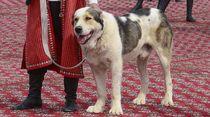 Gegara Anjing Ini, Turkmenistan Punya Hari Libur Nasional Baru