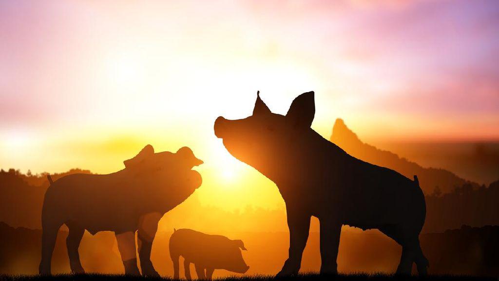 Jenis-jenis Babi yang Ada di Indonesia: Babi Kutil hingga Babi Berjenggot